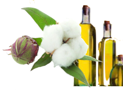 cotton-oil-cat